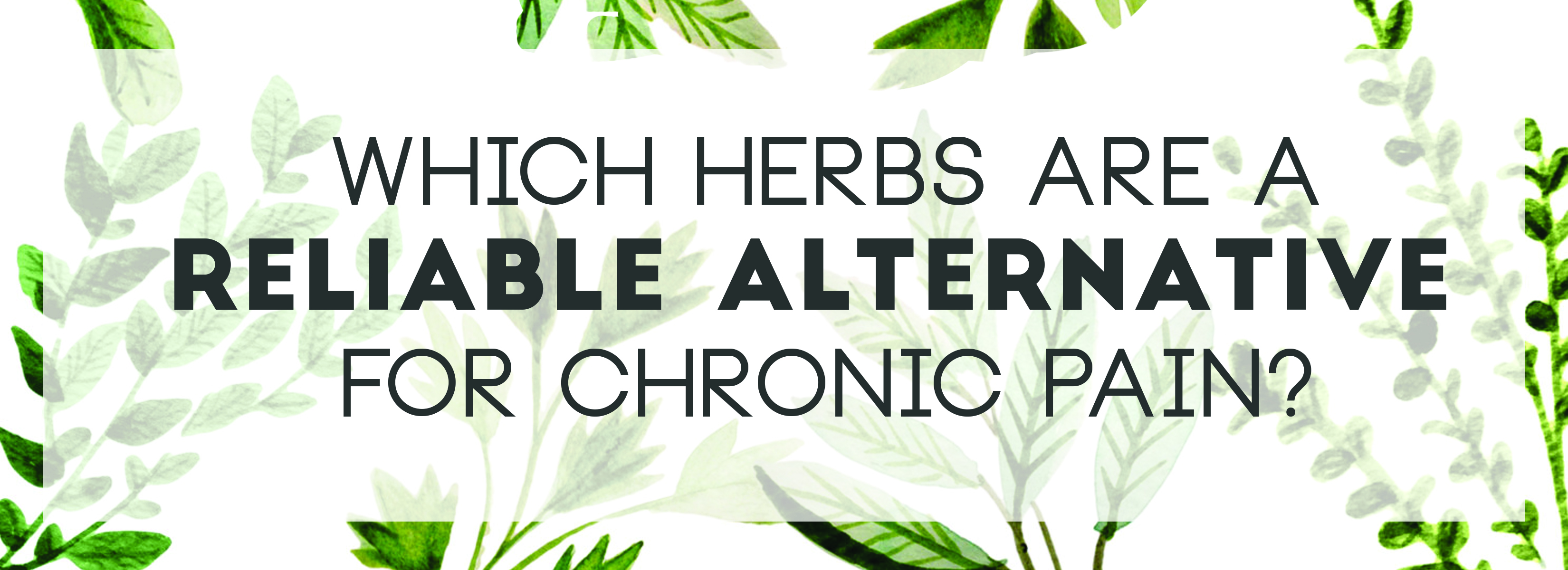 Which Herbs Are A Reliable Alternative For Chronic Pain Highland